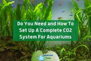 Set Up Complete CO2 System for Aquarium by Aquarium Tales