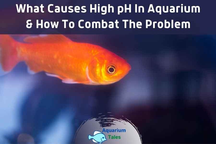 What Causes High pH In Aquarium by Aquarium Tales