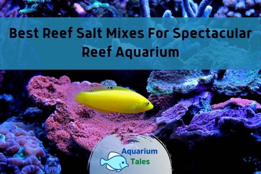 Best Reef Salt Mixes by Aquarium Tales