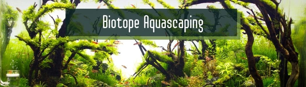 Biotope Aquascaping