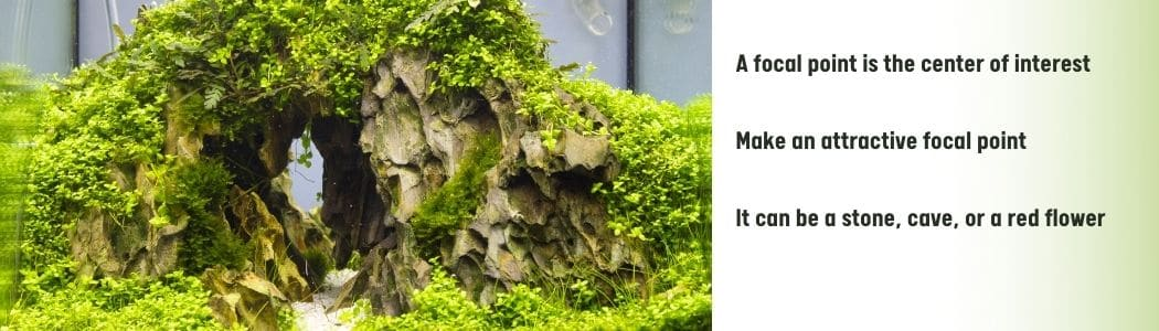 Focal point in Aquascaping