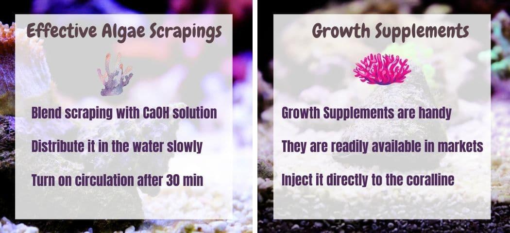 How Do You Increase Coralline Algae Growth Tips
