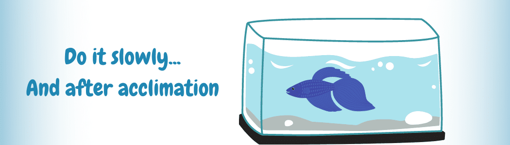 How To Add Bettas To The Aquarium (1)