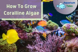 How To Grow Coralline Algae by Aquarium Tales