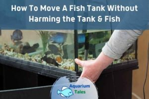 How To Move A Fish Tank Without Harming the Tank & Fish by Aquarium Tales