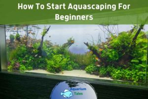 How To Start Aquascaping For Beginners by Aquarium Tales