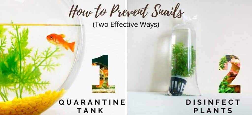 How to Prevent Snails in Two Effective Ways
