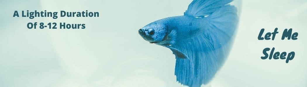 Lighting Requirement For Betta Fish
