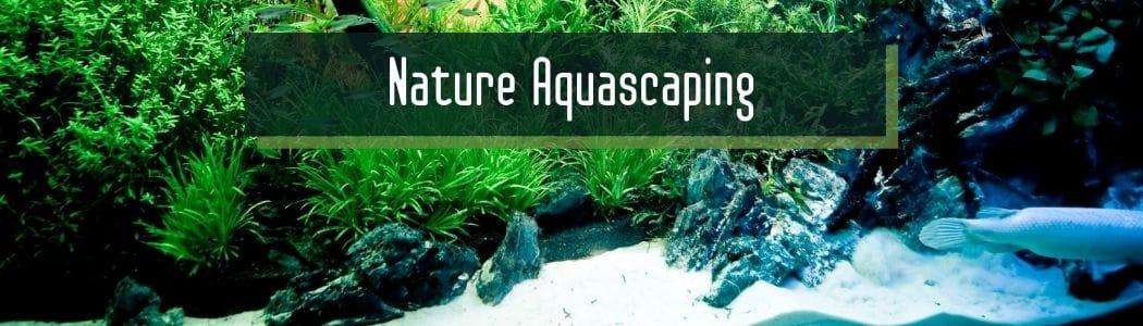 Nature Aquascaping
