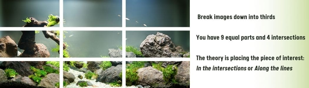 Rule Of Thirds in Aquascaping