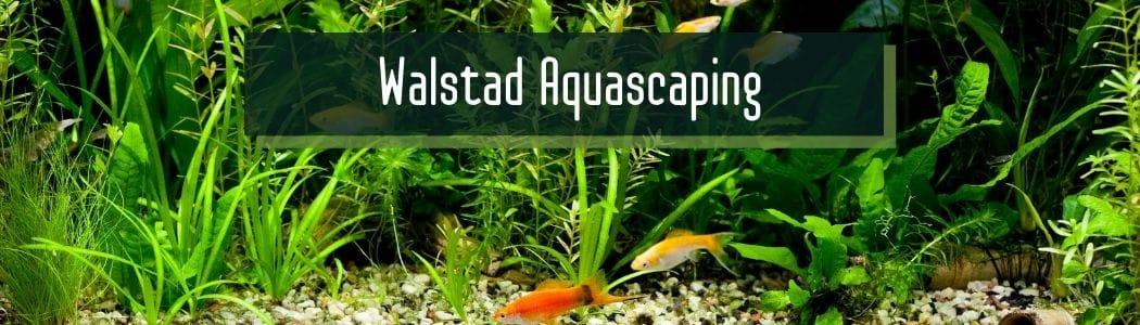 Walstad Aquascaping