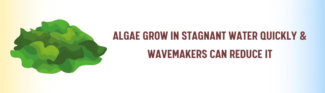 aquarium wavemaker helps Reduce Algae Growth