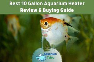 Best 10 Gallon Aquarium Heater by Aquarium Tales