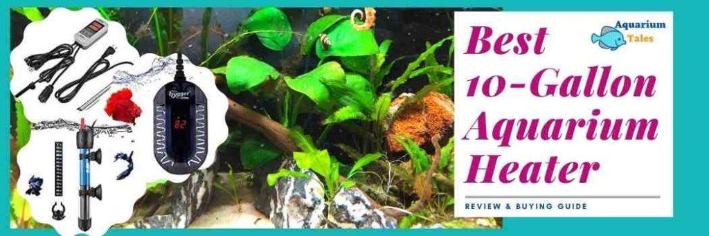 Best 10-gallon aquarium heater (Review & Buying Guide)