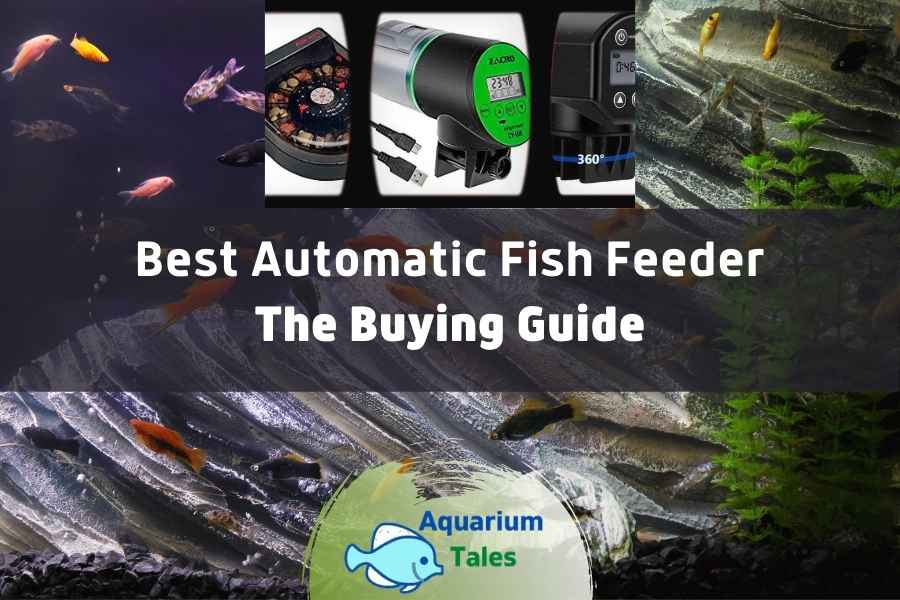 Best Automatic Fish Feeder by Aquarium Tales
