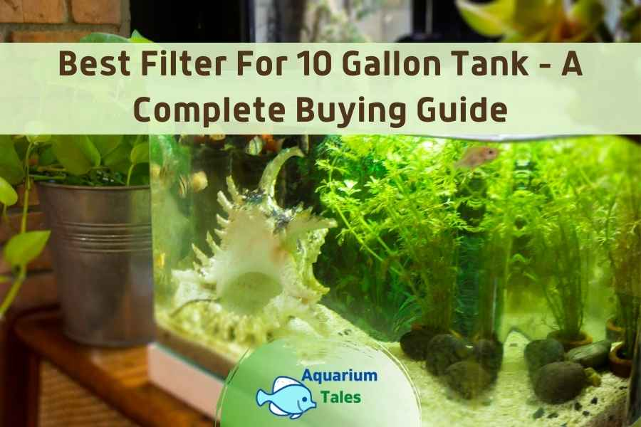 Best Filter For 10 Gallon Tank by Aquarium Tales
