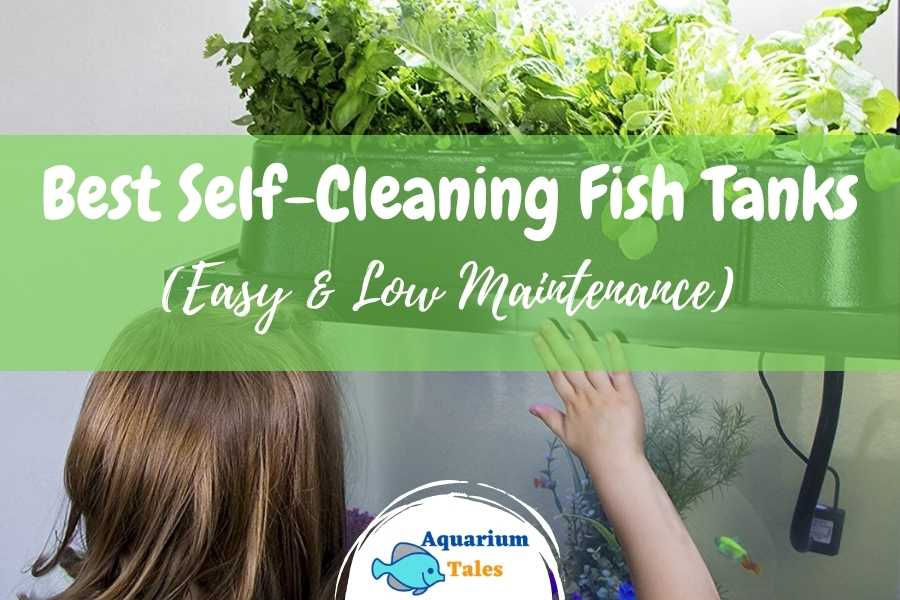 Best Self-Cleaning Fish Tank Review