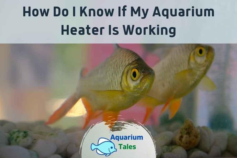 How Do I Know If My Aquarium Heater Is Working - Aquarium Tales