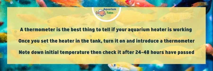How Do I know If My Aquarium Heater Is Working - Thermometer