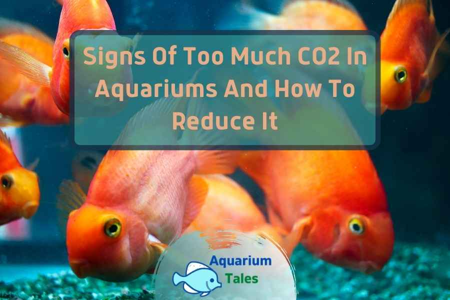 Signs Of Too Much CO2 In Aquariums And How To Reduce It by Aquarium Tales