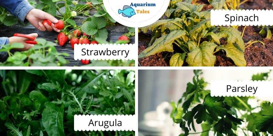 Best Plants For Nutrient Film Technique