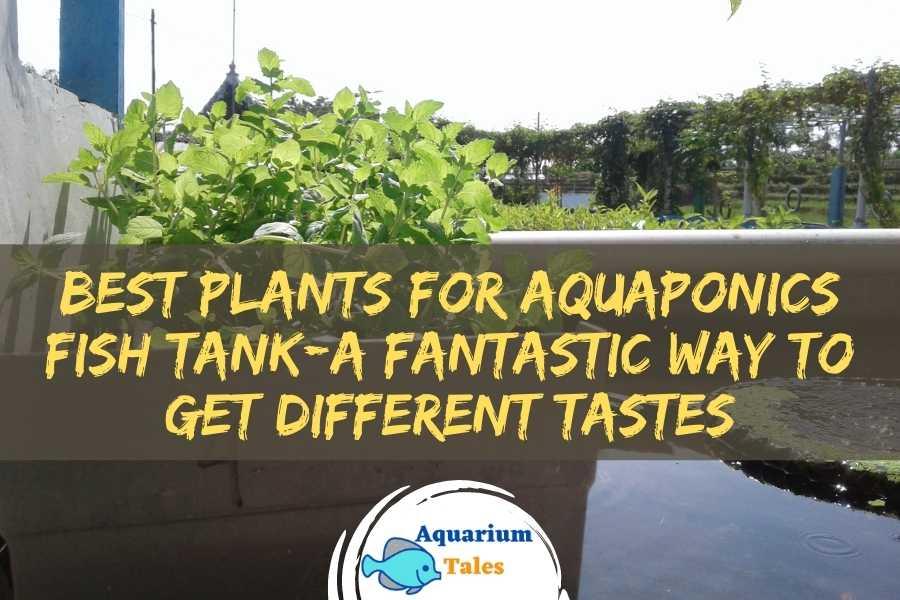 Best Plants for Aquaponics Fish Tank