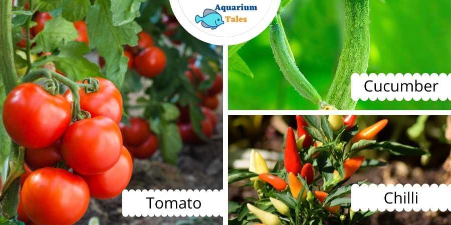 Best Plants for Media Based Aquaponics
