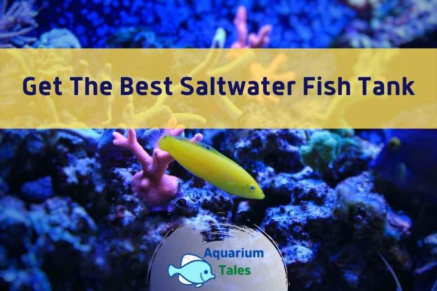 Best Saltwater Fish Tank - By Aquarium Tales