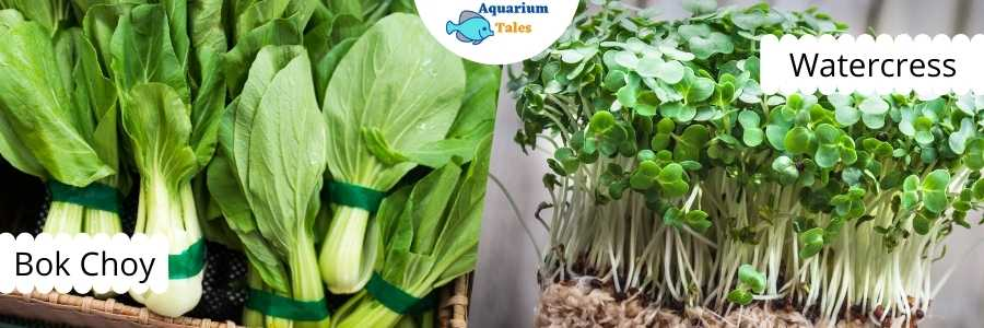 Bok Choy and Watercress for Raft System Aquaponics