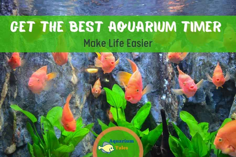 Get The Best Aquarium Timer – Make Life Easier