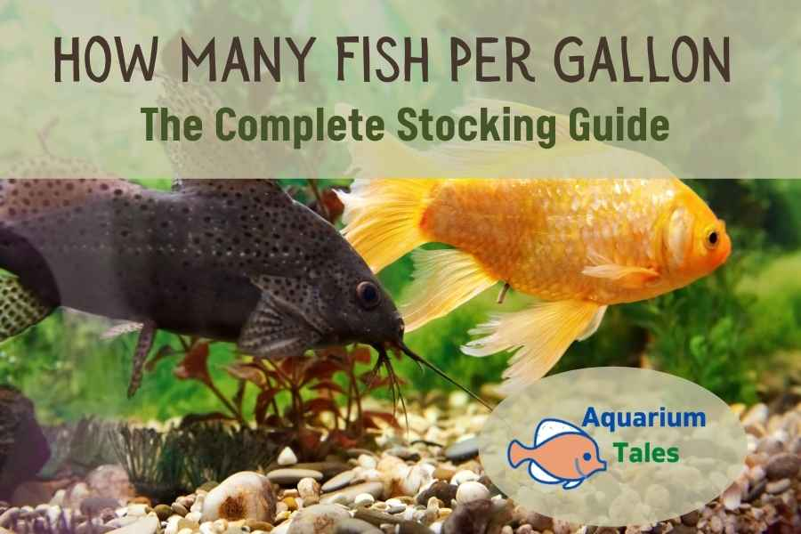 How Many Fish Per Gallon - The Complete Stocking Guide