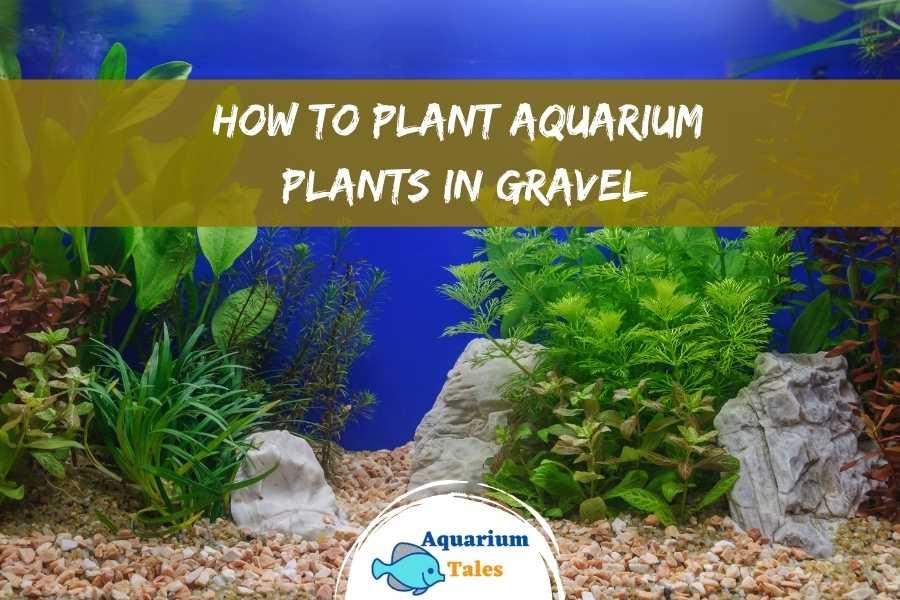 How to Plant Aquarium Plants in Gravel