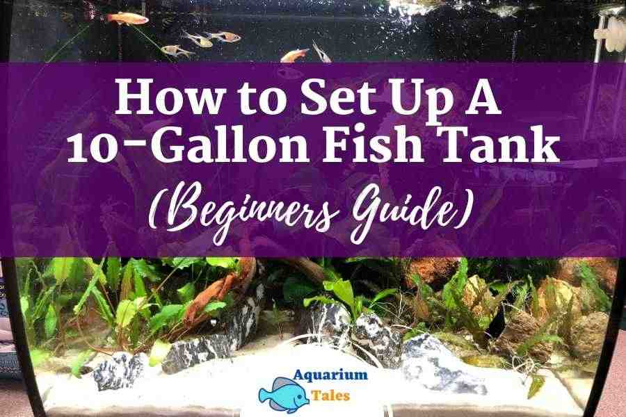 How to Set Up A 10 Gallon Fish Tank