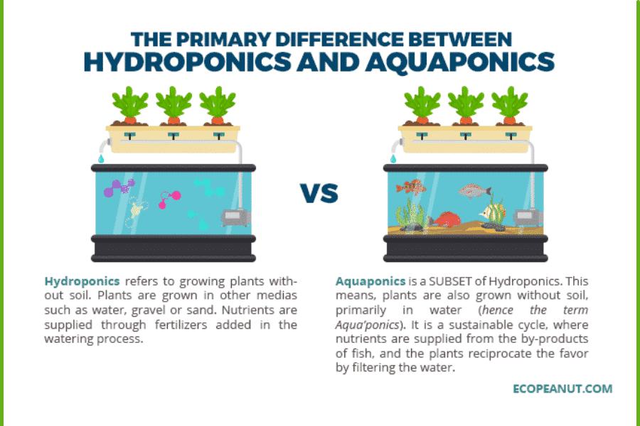 Hydroponics VS Aquaponics Comparison