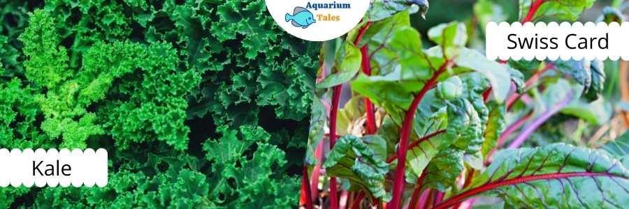Kale and Swiss Card for Raft System Aquaponics