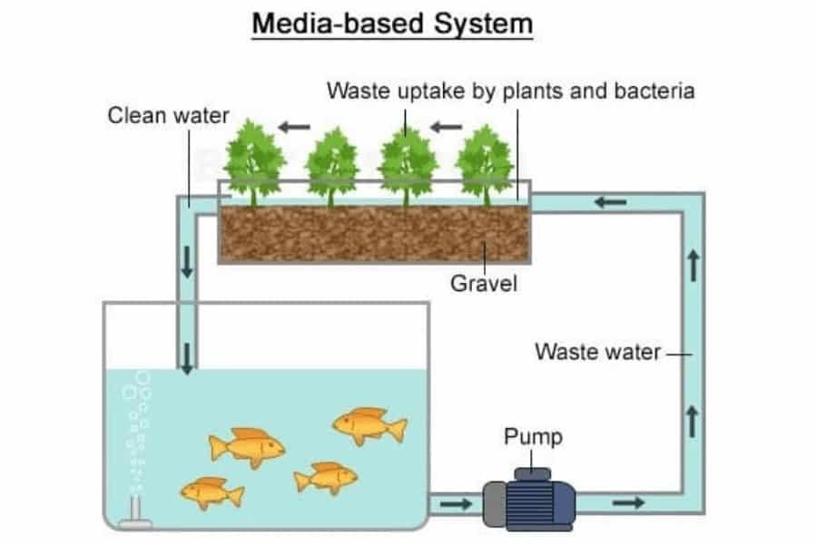 Media based aquaponics technique