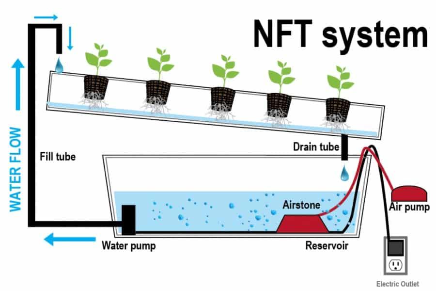 NFT aquaponics technique By Aquarium Tales