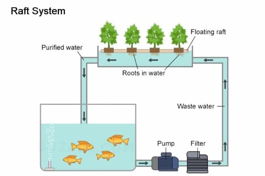 Raft System Aquaponics Technique