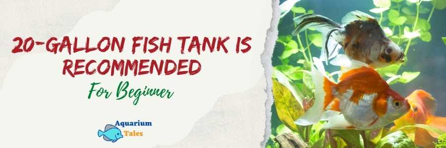 Recommended starter fish tank for beginners