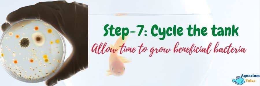 Step-7 Cycle the tank