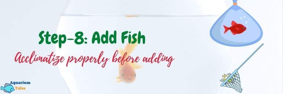 Step-8 Add fish