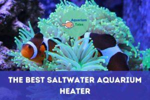 The Best Saltwater Aquarium Heater