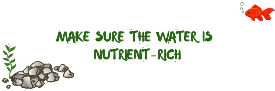 nutrient-rich-water-to-plant-aquarium-plants-in-gravel