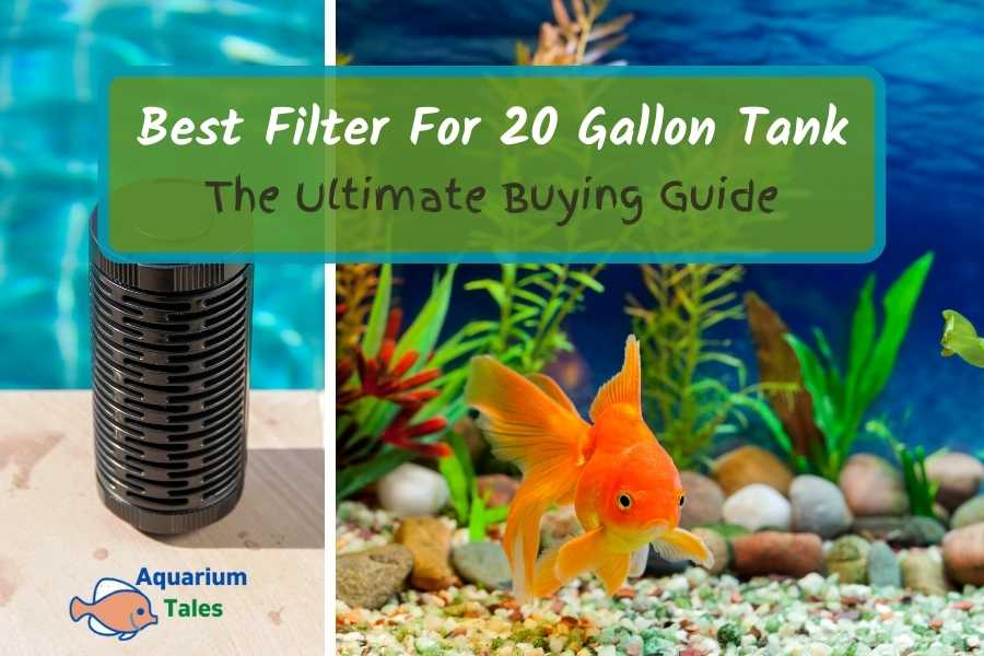 Best Filter For 20 Gallon Tank