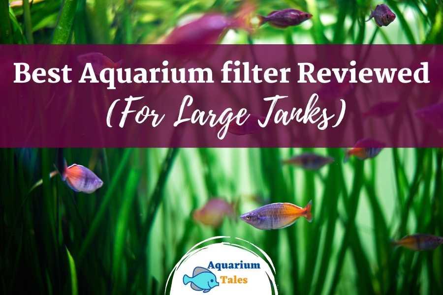 Best aquarium filter for large tanks
