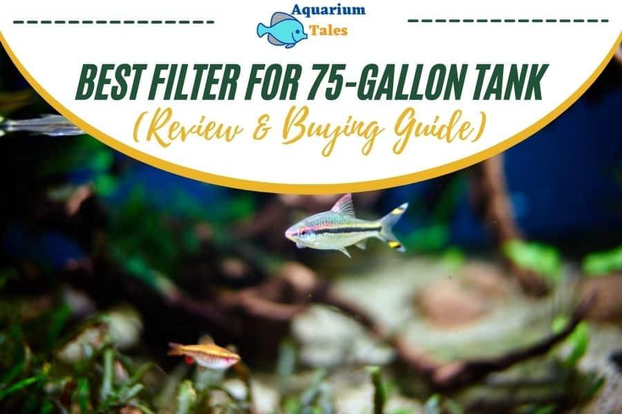 Best filter for 75 gallon tank