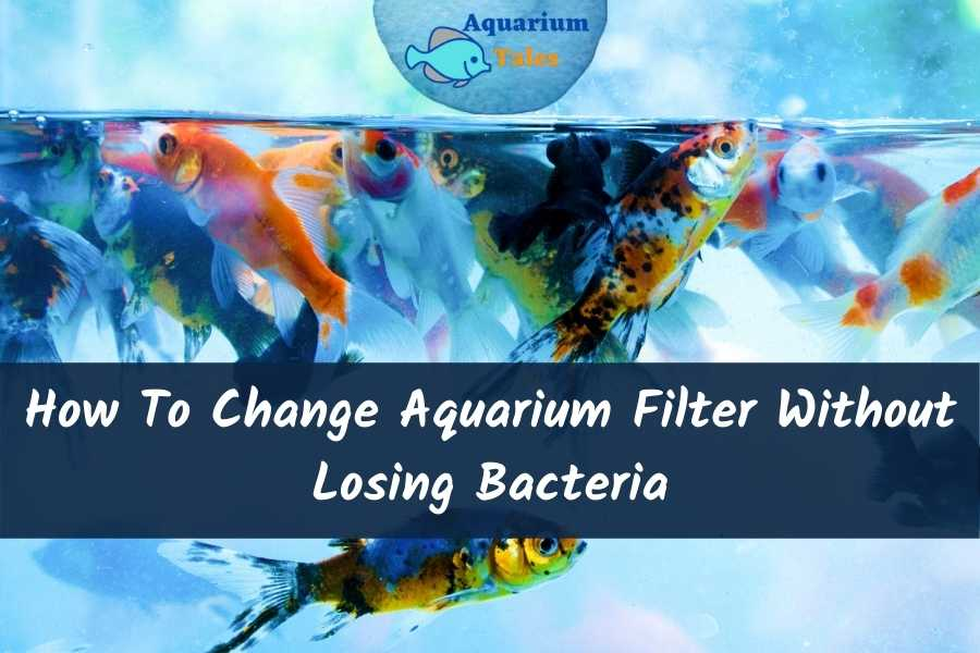 How To Change Aquarium Filter Without Losing Bacteria