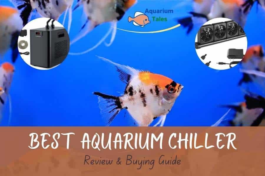 Best Aquarium Chiller