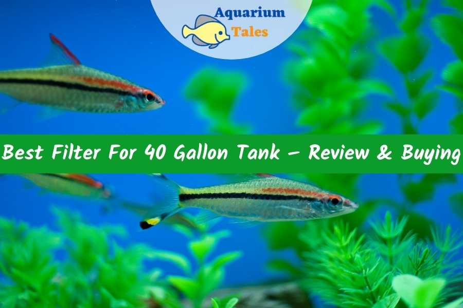 Best Filter For 40 Gallon Tank – Review & Buying