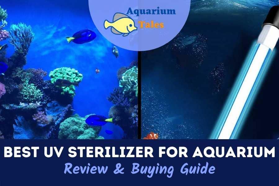 Best UV Sterilizer For Aquarium